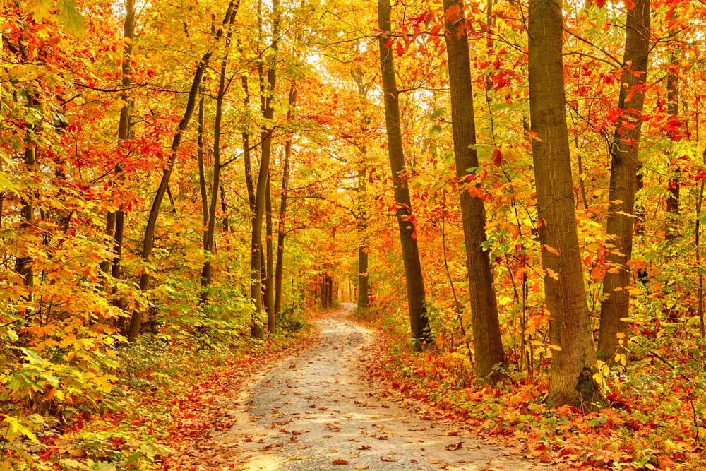 Michigan Fall Colors Limo Tours